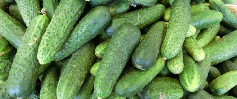 cucumbers-379886_1280